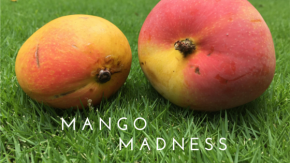 Mangoes That Murder and the Lunatics Who Love Them
