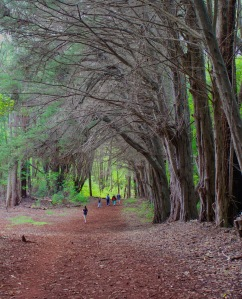Olinda Forest Trees
