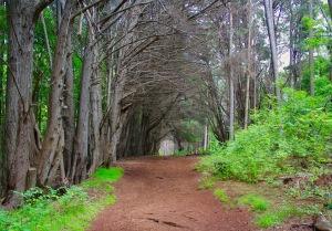 Maui Forest