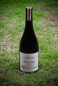Maui Wine Syrah