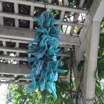 Hanging plant at Maui Wine Ulupalakua