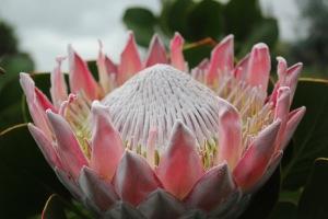 Lavender Farm Maui