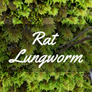 Rat Lungworm.png